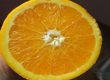 Το πορτοκάλι