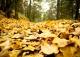 Τα πεσμένα φύλλα του φθινοπώρου